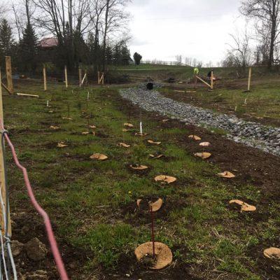 Stream Buffer Planting & Farm Exclusion Fence