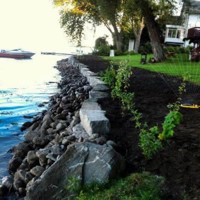 Shoreline Restoration with Native Shrub Plantings
